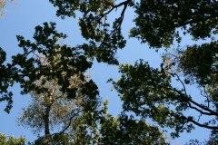 Natuurbegraafplaats-Fryslan-30-september-zon-052