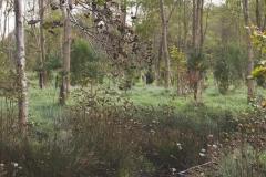 natuurbegraafplaatsnieuwehorne_bos