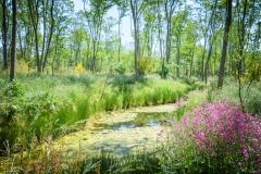 natuurbegraafplaatsnieuwehorne_watergang
