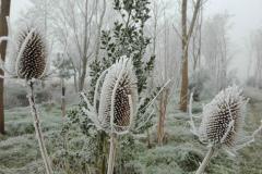 winterknoppen