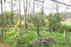 natuurbegraafplaatsnieuwehorne_grafplek2