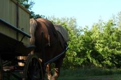 natuurbegraafplaatsnieuwehorne_paardwagen