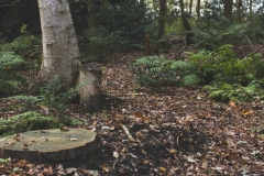 natuurbegraafplaatsnieuwehorne_grafplek