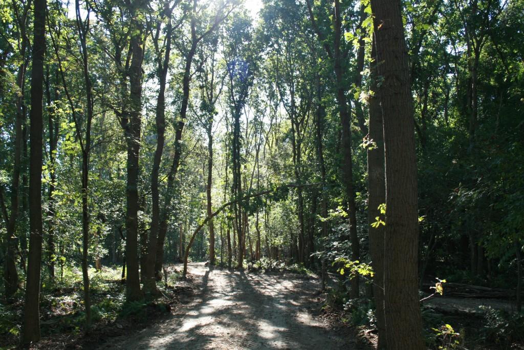 natuurbegraafplaats friesland natuurgebied nieuwehorne