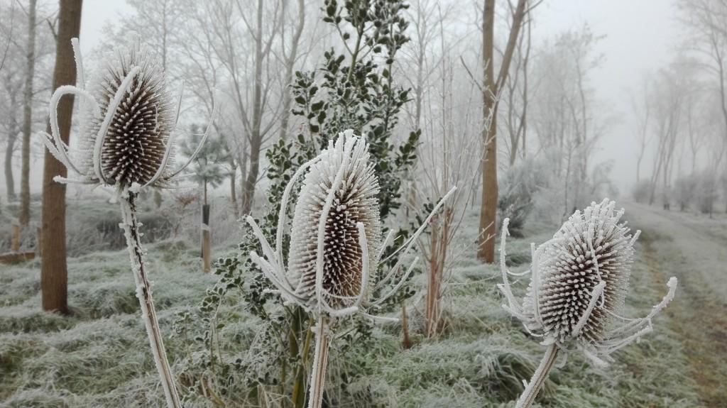 kaardenbol-natuurbegraafplaats-friesland
